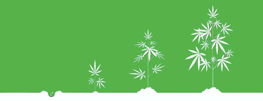 Ang Bag-ong Mausab nga Cryptocurrency Cana Token Gilansad - Gipaluyohan sa Mga Binhi sa Cannabis