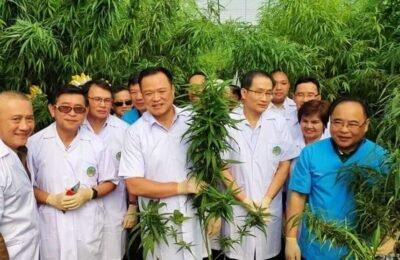Thailand Is Van Plan Om In 2021 Zijn Eerste Medicinale Cannabistour Te Organiseren