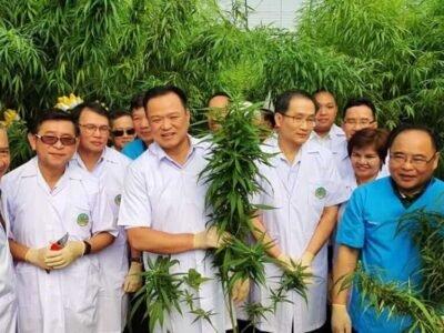 Plano sa Thailand nga i-host ang labing una nga medisina nga paglibot sa cannabis kaniadtong 2021