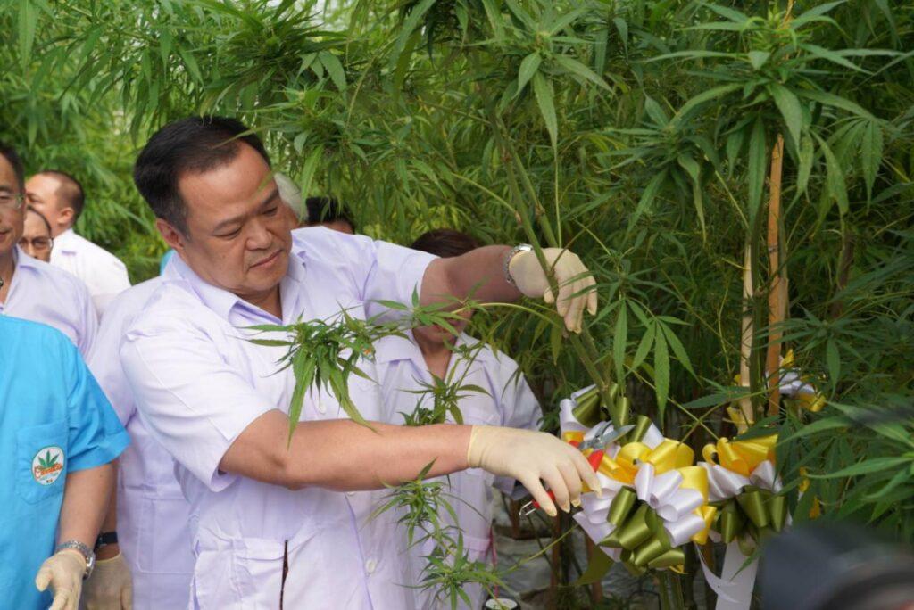 het promoten van medicinaal toerisme en het gebruik van medicinale cannabis