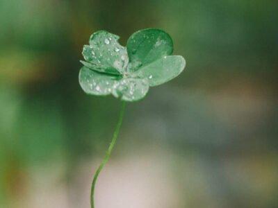 Tijdelijke Levering Van Medicinale Cannabis In Ierland Wordt Permanent