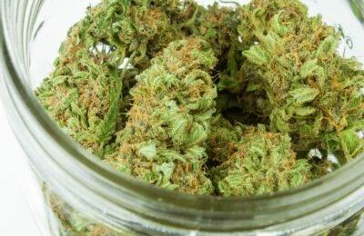 Het Aantal Registraties Voor Medicinale Cannabis In Canada Neemt Toe Tijdens De Pandemie