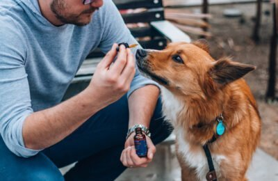 Nieuwe Wet In Michigan Laat Dierenartsen CBD Als Optie Met Eigenaren Van Huisdieren Bespreken