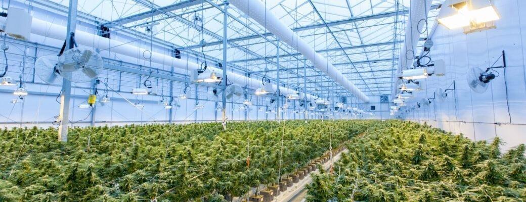 Canadees Cannabisteam Neemt $ 178 Miljoen Aan Drugs In Beslag En Sluit 78 Cannabiswinkels