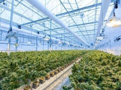 2021-01-08 Gisakmit sa Koponan sa Cannabis sa Canada nga $ 178 Milyon Droga Ug Gisira ang 78 nga Tindahan
