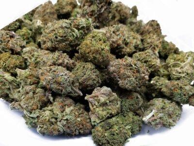 2021-02-01-Bilyon nga Gramo Sa Cannabis nga Gitago nga Wala Gibaligya
