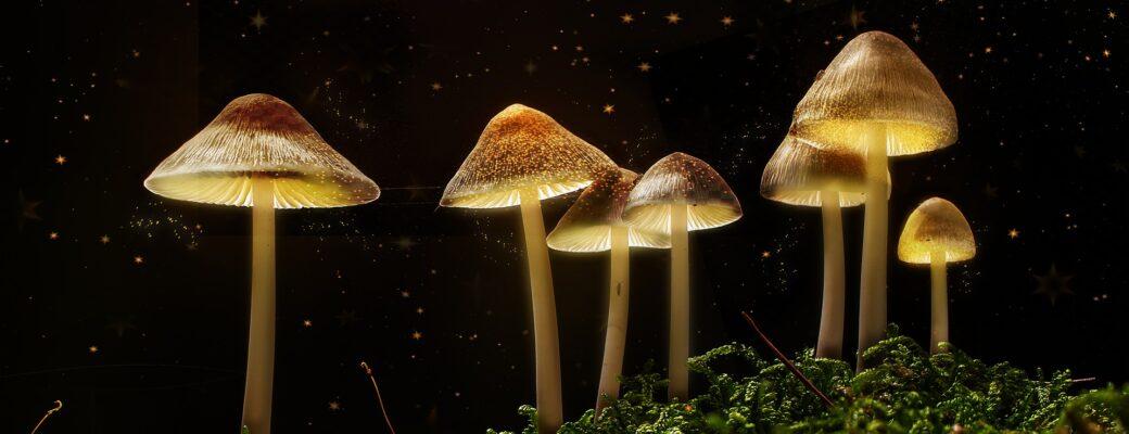 Terapija psihodeličnim gljivama sada se nudi na klinici Calgary