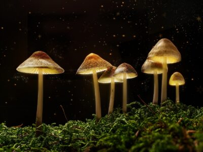 2021-02-22-Psychedelic Mushroom Therapy Now Offered At The Calgary Clinic