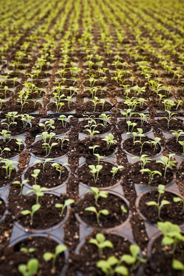Canopy Growth tekent een deal ter waarde van $ 345 miljoen om Supreme Cannabis te kopen (afb.)