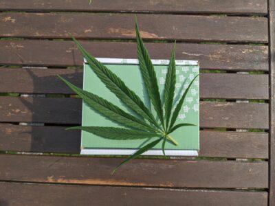 Wat Doet De Niet-psychoactieve Cannabinoïde CBDV (Cannabidivarin)?