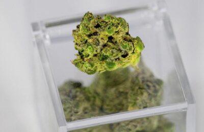 Onderzoek: Terpenen Imiteren En Versterken De Cannabinoïde Activiteit
