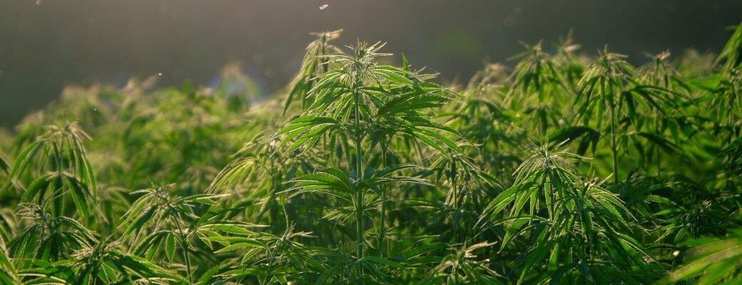 Cannabislegalisatie Kan Toerisme In Thailand Een Boost Geven