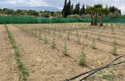 2021-06-20-DrugsInc.-bezoekt-CBD-Farm-in-Spanje-We-willen-de-cbd-branche-professionaliseren