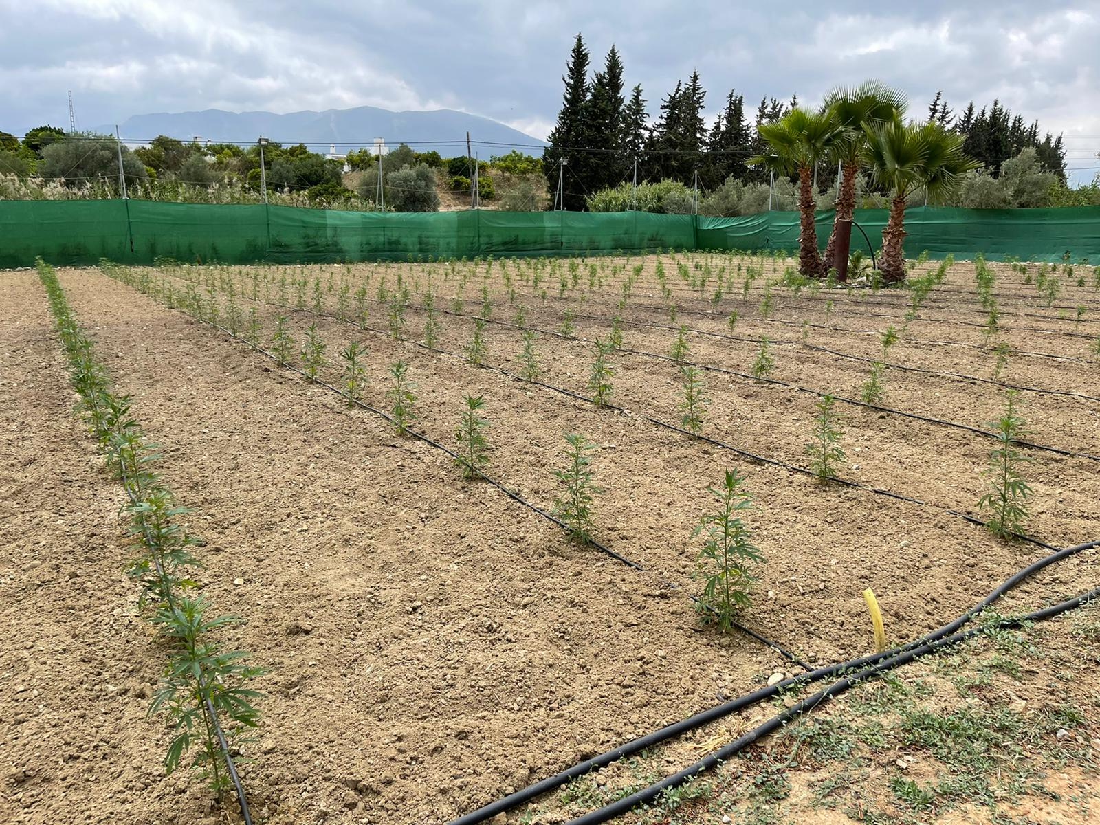 2021-06-20-DrugsInc.-posjeta-CBD-Farma-u-Španjolskoj-Želimo-profesionalizirati-cbd-industriju