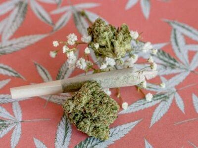 2021-07-03-Le-test-néerlandais-de-weed-atteint-le-creux