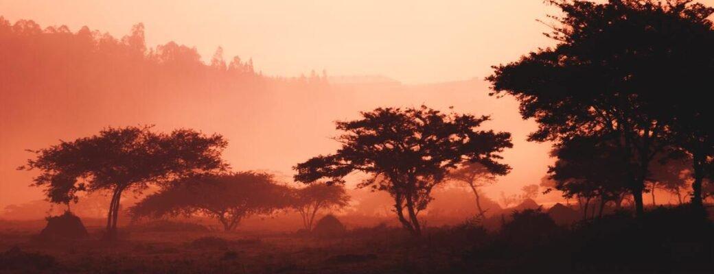 Ruanda legalizira uzgoj, prodaju i upotrebu ljekovite kanabisa