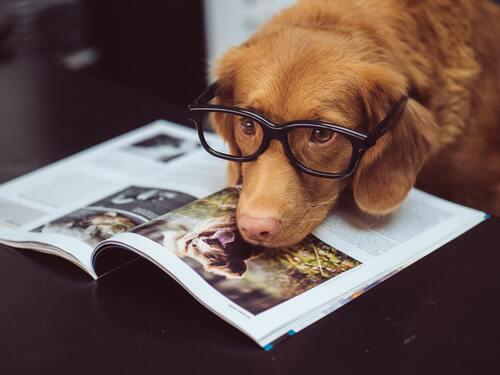 CBD ulje za pse može pomoći kod različitih zdravstvenih problema (sl.)