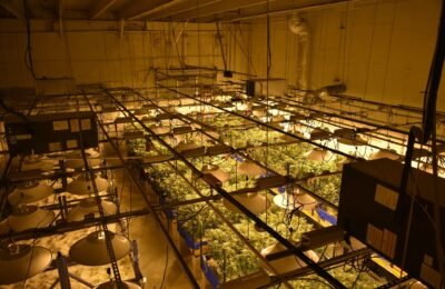 2021-07-08-2Cos'è la Botrytis e come prevenire il fallimento del raccolto di cannabis?