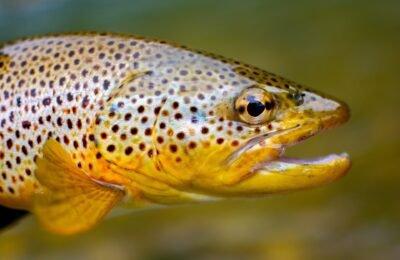 2021-07-09-Vissen Raken Verslaafd Aan Meth Omdat Illegale Drugs Het Water Vervuilen