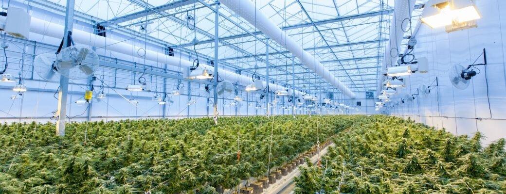 Amerikaanse Cannabisverzekeraars Maken Zich Klaar Voor Federale Legalisatie