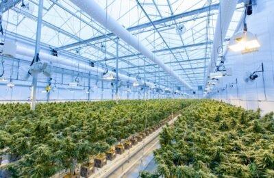 2021-08-23-US Osiguravatelji kanabisa pripremaju se za saveznu legalizaciju