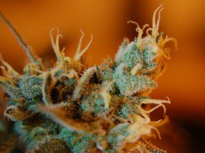 2021-10-23-Bank Of America Sluit Bankrekening Van FDA-goedgekeurd Cannabisonderzoeksbureau